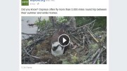 facebook-live-videos