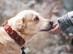 Les meilleures applications pour chiens sur Android